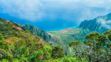 Hawaii's invasive plants, and how machine learning can help solve it
