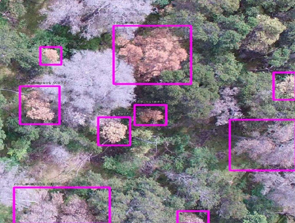Machine-learning-detecting-invasive-plants
